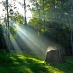 paisajes-de-bosques-028