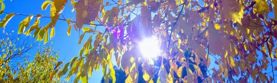Retiro de Otoño: Raíces y hojas